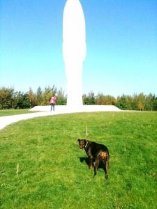 Walkies Dog Walking Services 07515 340 971 - Gallery image 2