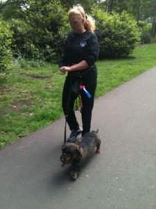"""Walkies"" Dog Walking Services 07515 340 971 - Gallery image 1"