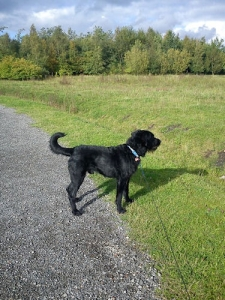 Walkies Dog Walking Services 07515 340 971 Gallery image 44