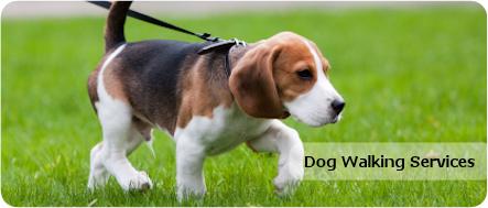 Dog Walking  Banner