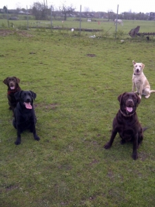 """Walkies"" Dog Walking Services 07515 340 971 - Gallery image"