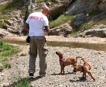 Training abandoned pets in Spain